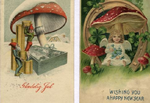 Fly Agaric Drawing The Fly Agaric Had Not